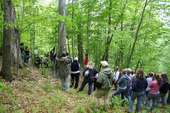 Tom Tells about a Very Old Beech Tree - But we're not in the Old Growth Forest yet...