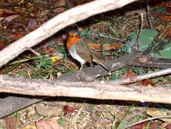 Robin keeping me company