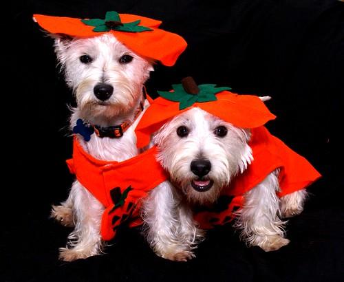 Pissed Pumpkins