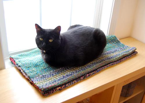 Ellie loves her fabric