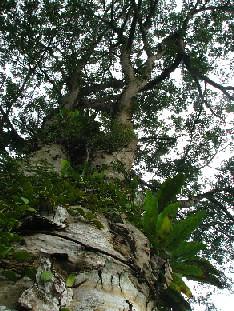 PalmValley_Tree_20071102_02x