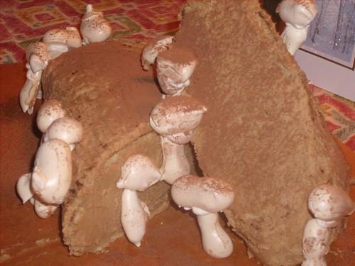Daring Bakers - Yule Log