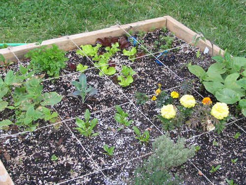 first plantings