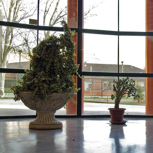 cristalera y plantas 1 15x15