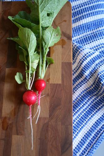 fresh cherry belle radishes from the garden