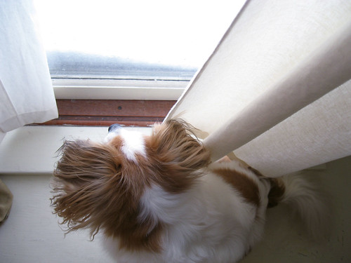 Bean in the window.