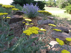 yellow and purple flowers in front beds