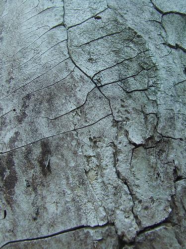 bark study 2