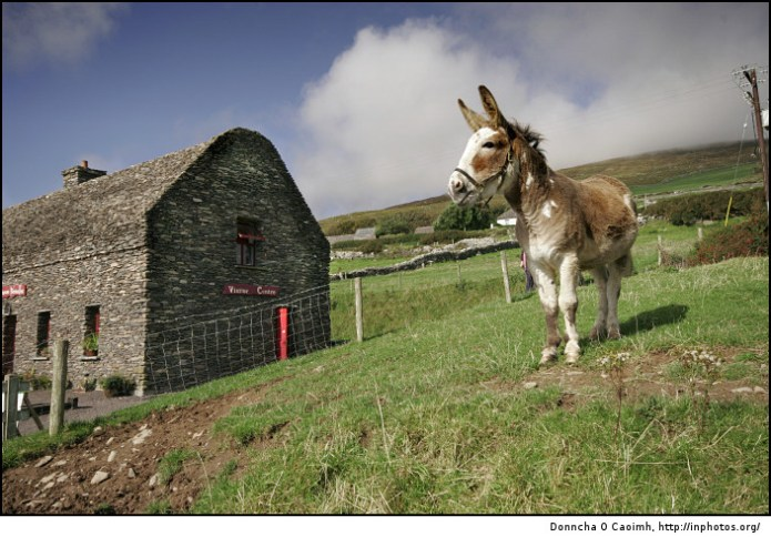 Lonesome Donkey