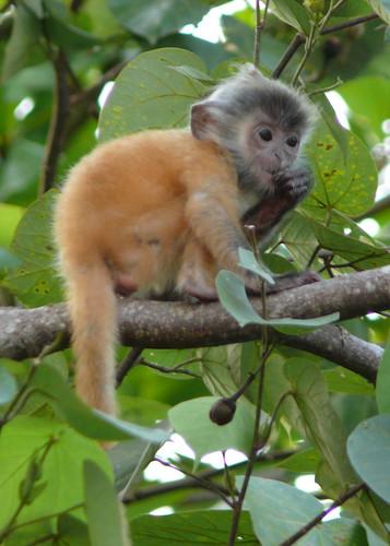 THESE monkeys. :)