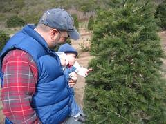 Walker inspects the tree