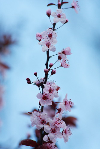 Flores en árbol (III)
