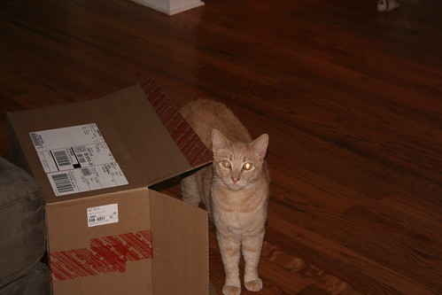 Chester in a box