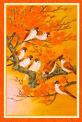 MFPA - sparrows