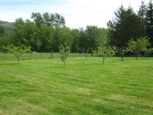 Orchard May 09 (Medium)