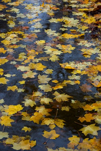 Drowning Leaves
