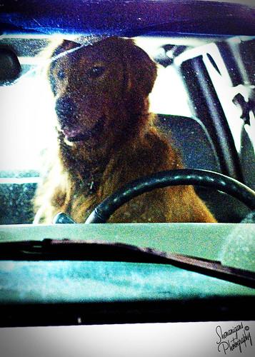 bruce driver 3