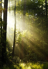 Morning Rays through trees