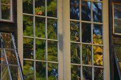 windows reflecting fall