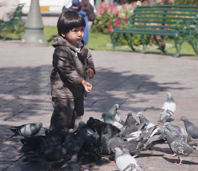 I'm surprised the kids aren't afraid of the swarm of pigeons they attract. I am.