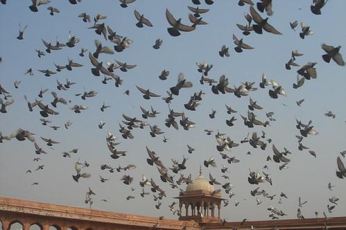Old Delhi_迦瑪清真寺(Jama Masjid)1-54