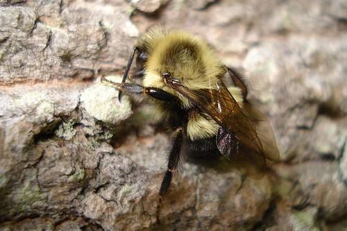 bee on a tree