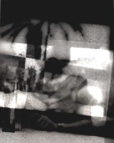 Joshua Tree and Sandy photogram