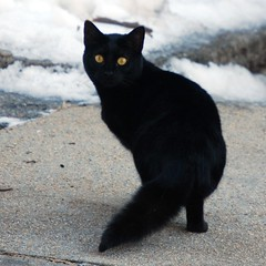 The Blackest of Cats