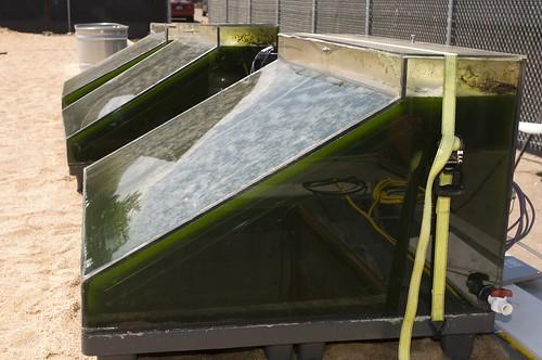 Image of Algae Biofuel in the making