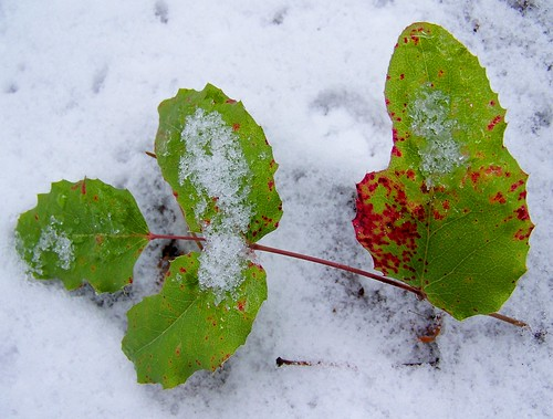 A small splash of winter color
