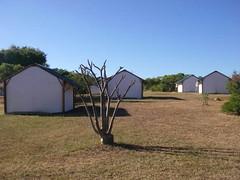 Zebu camp pour un tourisme durable dans la SAVA
