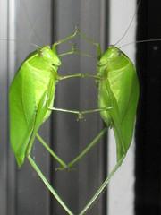 Bug & Reflection 2