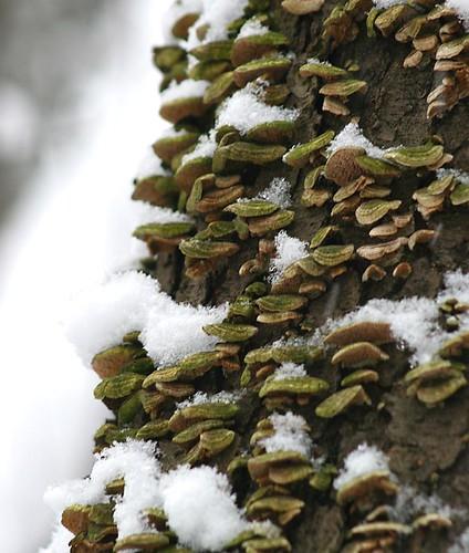 Fungus11