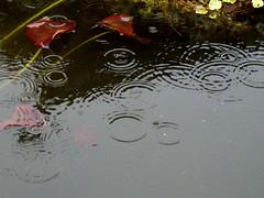 Rain Study 2