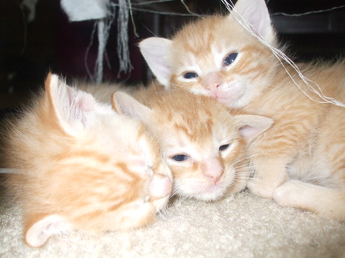 Baby kitties by you.
