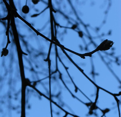 The Darling Buds Of... March