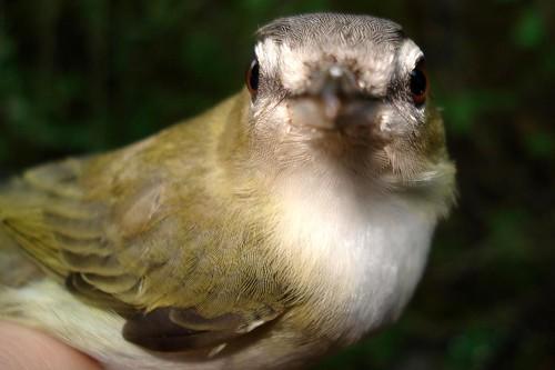 birdQUIZ