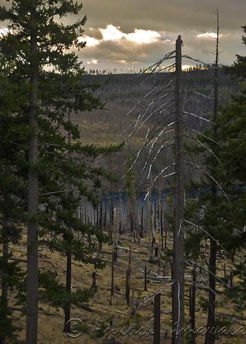 Burnt Wilderness