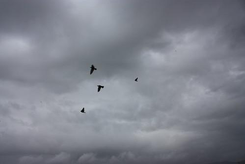 Rain and birds