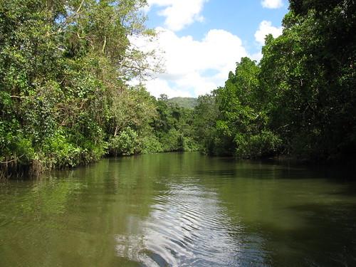 Navigando sul fiume Daintree