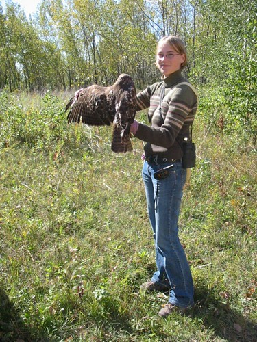 Banded Red-tailed Hawk and me