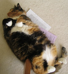 Fuzz Ball Cat