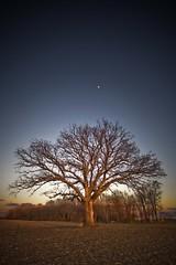 The Tree 47
