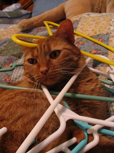In the Hangers