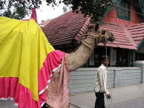 exotic animal in Bangalore...