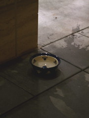 Eddie Bauer's dog dish