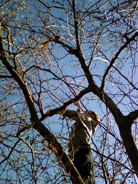 Shane in a Tree