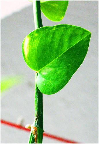 Leaf, stem and retouching