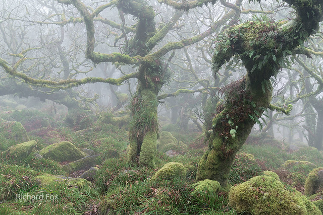 Twisted oaks
