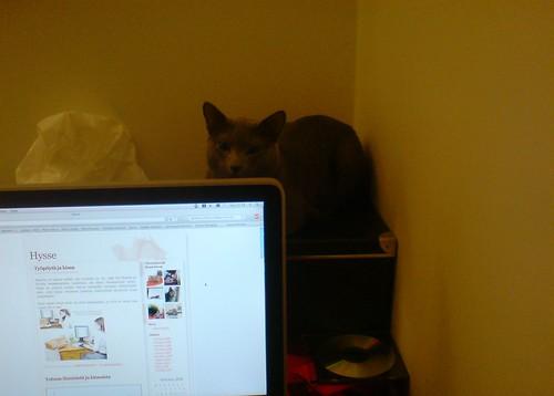 Työpöytä ja kissa